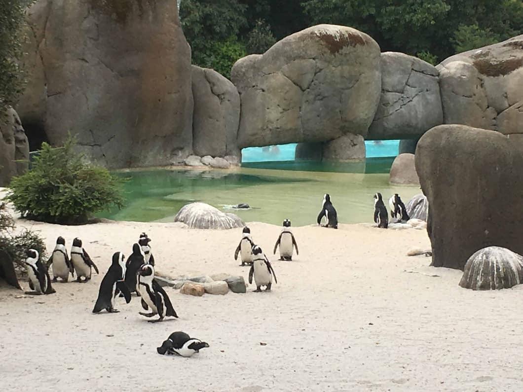 Ippopotami, pinguini, giraffe e molto altro ancora… questo è Zoom!