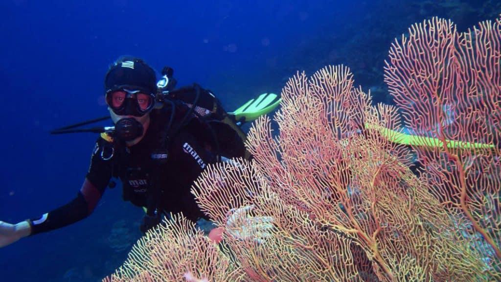 Immersioni fra i coralli delle Maldive