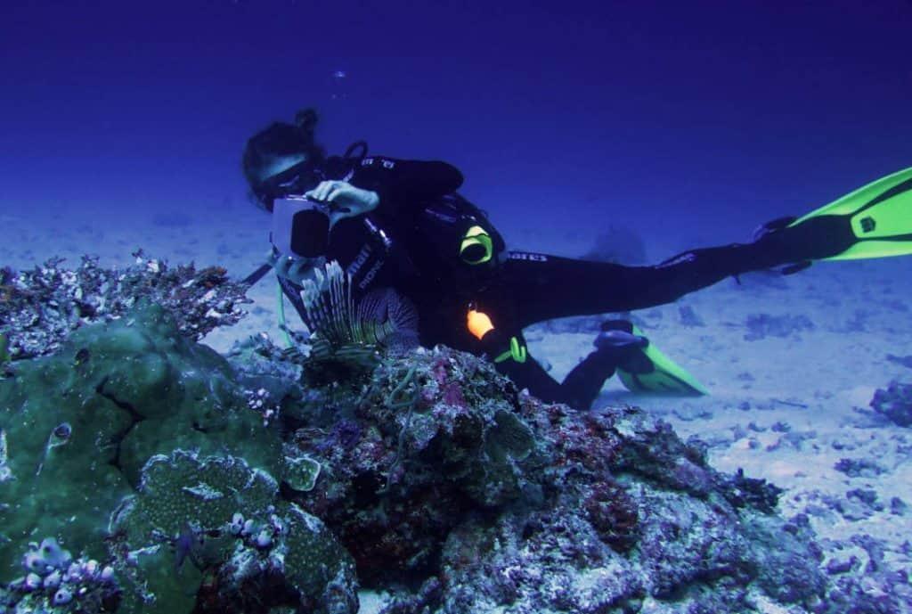 Sub e snorkelling alle Maldive
